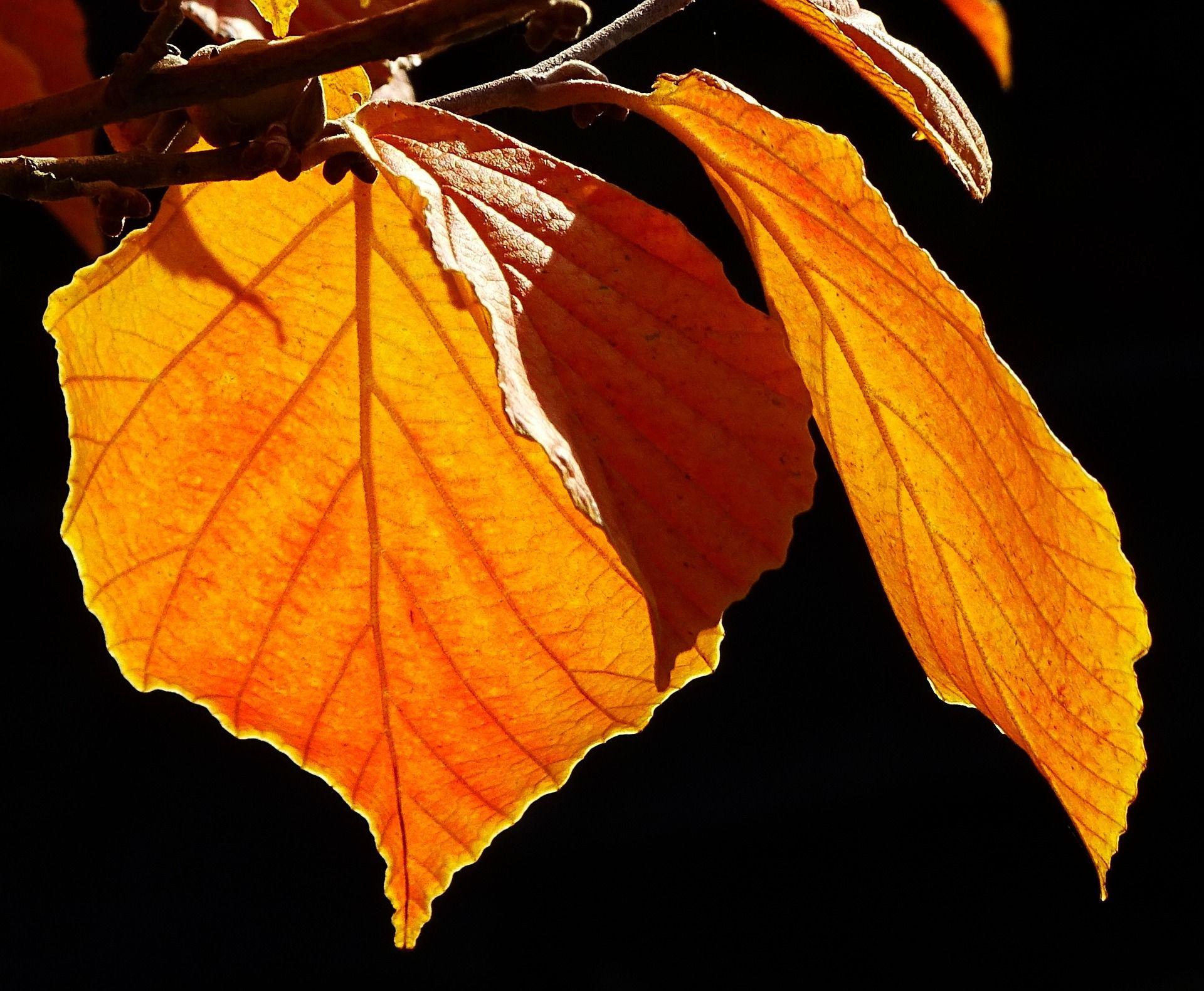 Blätter die sich zuwenden